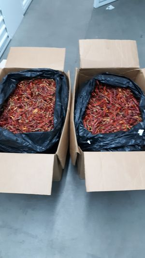 Organic Thai Cayenne HOT,HOT Chili Peppers for Sale in Denver, CO
