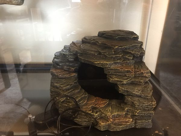 Reptile Enclosure with Lamps, Heating Pads, Decor and more!
