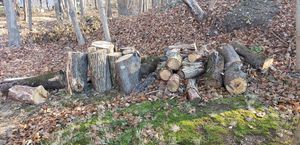 FREE WOOD for Sale in South Attleboro, MA