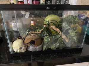 10 gallon reptile set up for Sale in Portland, OR