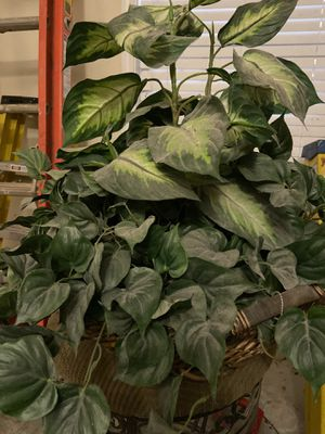 Decor plant for Sale in Atlanta, GA
