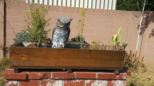 Wood planter window box with coconut dirt & plants for Sale in Norwalk, CA