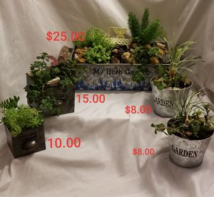 Mother's day plant arrangement s for Sale in Lakeland, FL