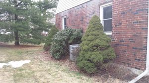 Free plants for Sale in Harrisburg, PA