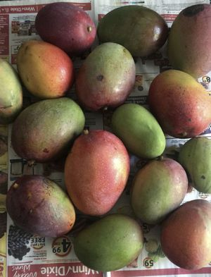 Mangoes for Sale in Miramar, FL