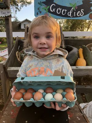 Fresh Eggs & Pumpkins! for Sale in Montesano, WA