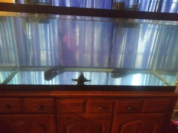 75 gallon aquarium one month old