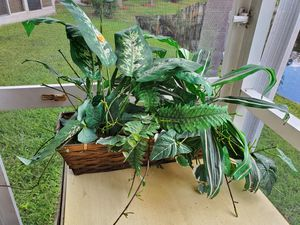 Decor Plant in Bamboo Basket for Sale in Aventura, FL