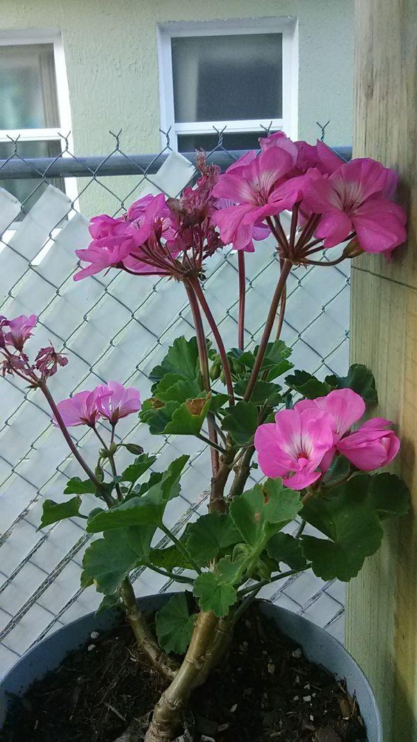 $5 House Plants