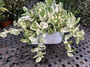 Plants de sombra grande for Sale in Bell Gardens, CA