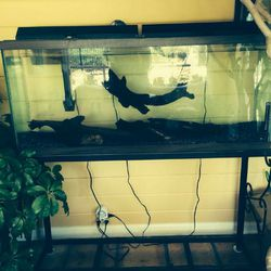 55 Gallon Fish Tank Set Up for Sale in Kings Mountain,  NC