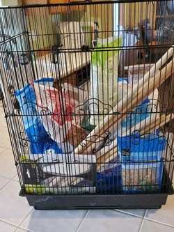 4 Parakeet (Budgies) & 2 Cages For Sale for Sale in Gresham,  OR