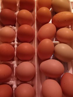 Fresh Eggs for Sale in Overton,  TX