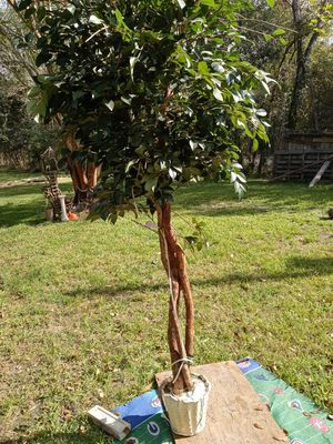 Large fake tree for Sale in Manvel, TX