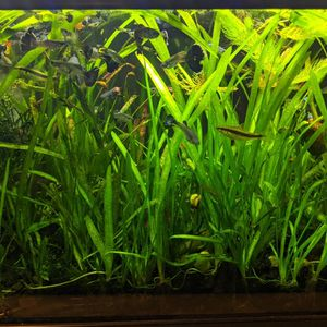Aquarium Plant In Bulk for Sale in Bell Gardens, CA