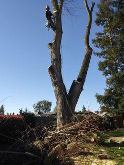 Free wood for Sale in Lodi,  CA