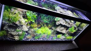 20 gallon long aquarium looks like a planted tank just easier for Sale in Sacramento, CA
