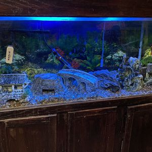 100 Gallon Fish Tank for Sale in Salinas, CA