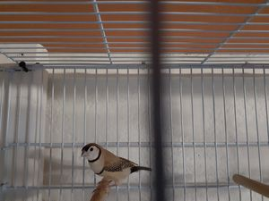 Jaulas +bird cages for Sale in North Miami, FL