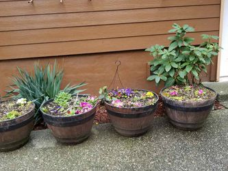 And I Have Flower Pots Plant Pots With Dirt $30 Each for Sale in Everett,  WA