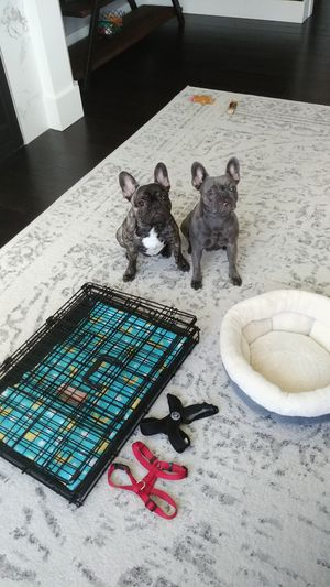 I-Crate puppy starter kit for Sale in Buckley, WA