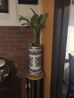 Plant for Sale in Pawtucket, RI