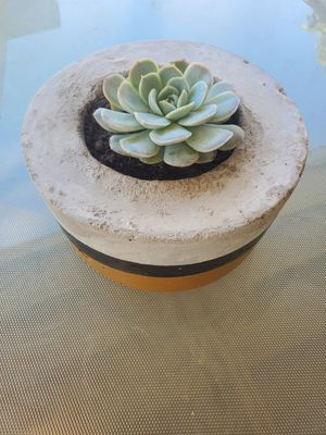 Cement planter with succulent plant for Sale in Tulare, CA