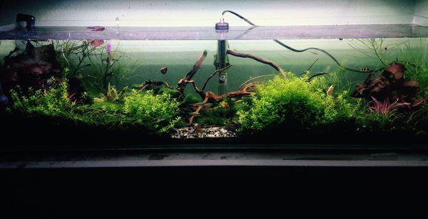 12 gallon aquarium