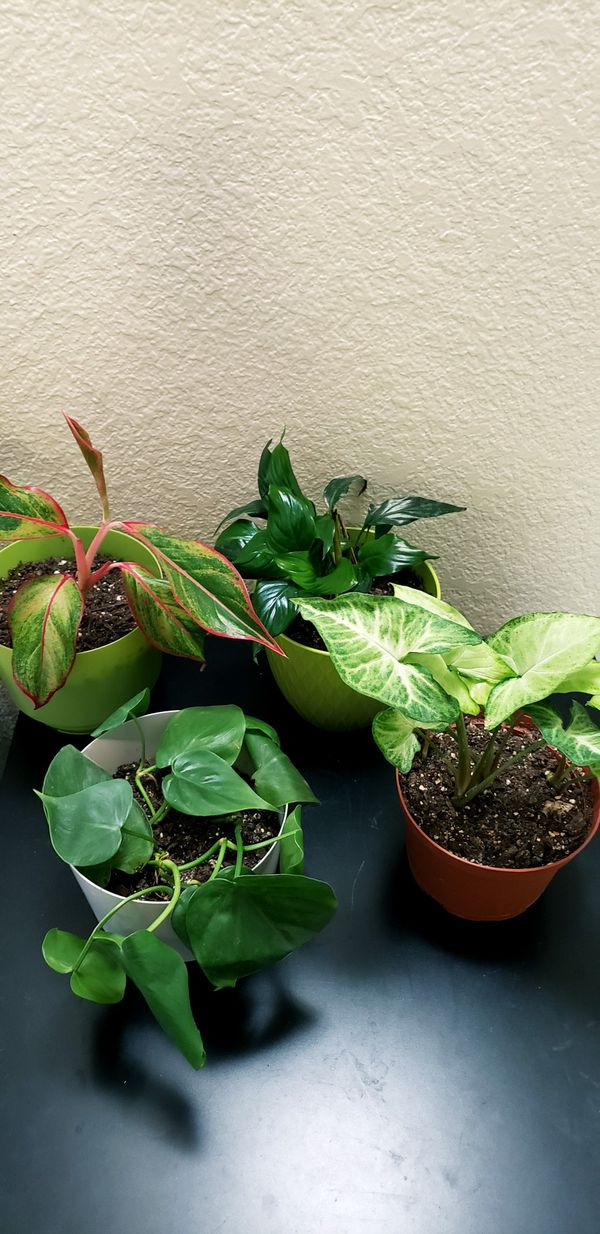 4 live indoor houseplants