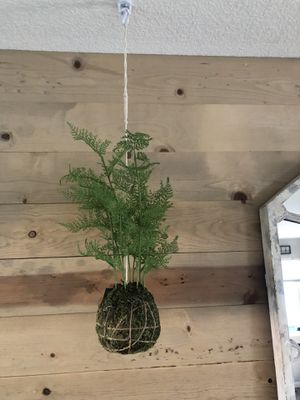 Hanging moss ball x 2 🌱 🌱 for Sale in Denver, CO