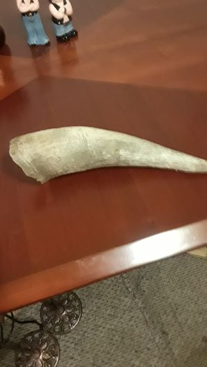 BULL HORN FOR REAL for Sale in Spokane Valley, WA