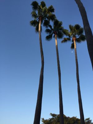 Designer photography for Sale in Encinitas, CA