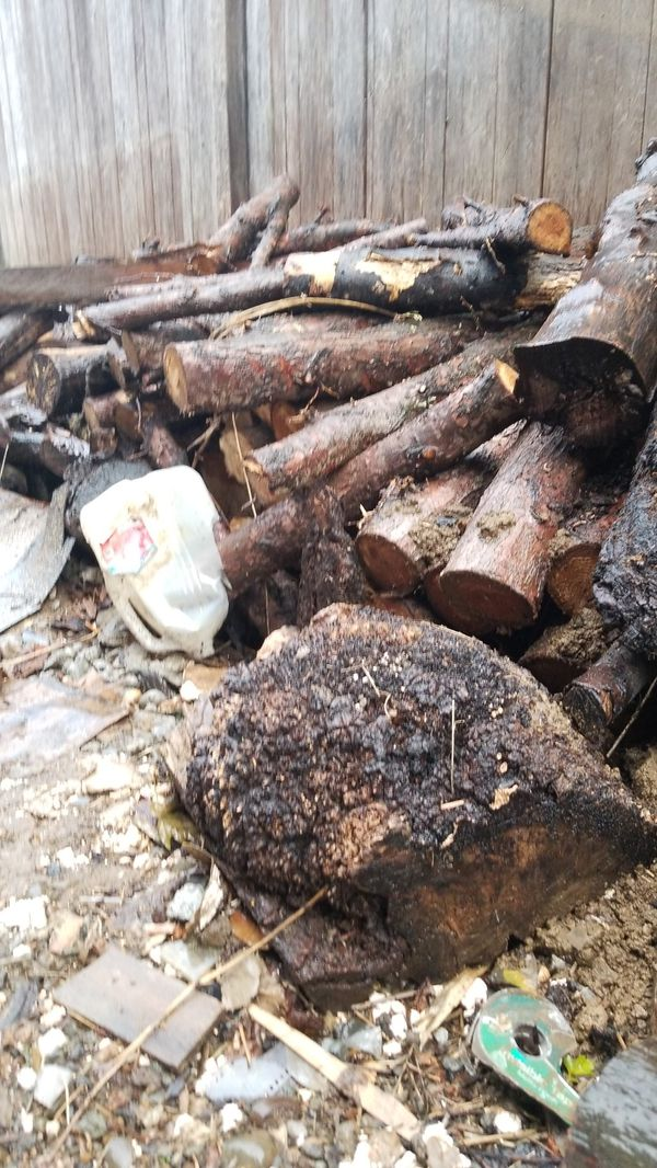Free Firewood in sellwood