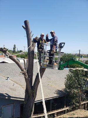 we remove any size trees, old,overgrown,trees that Havel tipped over,ext. for Sale in Oakland, CA