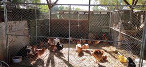 Panel y gallinas for Sale in Nuevo, CA