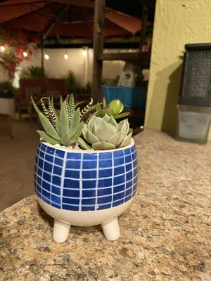 Succulent small blue and white pot for Sale in Fontana, CA
