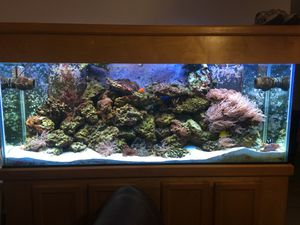 Fish tank 150 gallons for Sale in Tampa, FL
