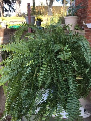Healthy House Plants for Sale in NO HUNTINGDON, PA