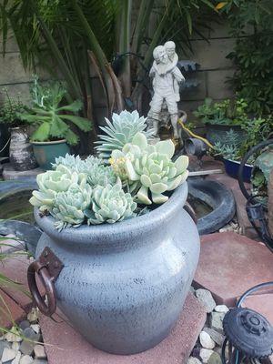 Succulent arrangements for Sale in San Bernardino, CA