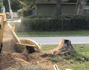 Free oak mulch/fill dirt for Sale in Ocala, FL