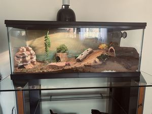 Custom reptile terrariums for sale!!! for Sale in Fridley, MN
