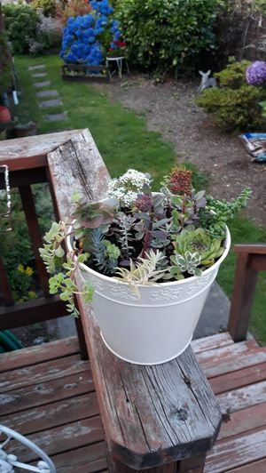 Shabby Chic Metal Planter Full of Succulent Plants Arrangement for Sale in Sumner, WA