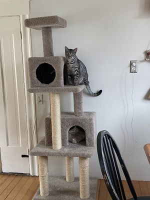 6 foot cat tower for Sale in Oakland, CA