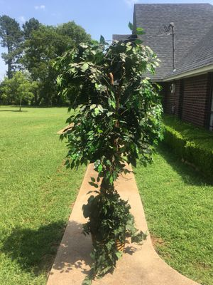 6ft Tree for Sale in Winona, TX