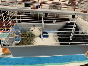 rabbit cage and accessories for Sale in Hialeah, FL