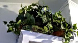 BIG BiG BIG FAKE PLANT for Sale in Placentia, CA