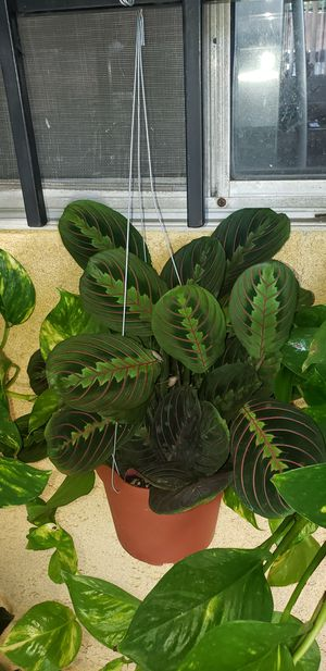PLANT for Sale in Montclair, CA