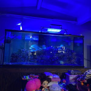 Salt Water Reef Tank for Sale in Long Beach, CA