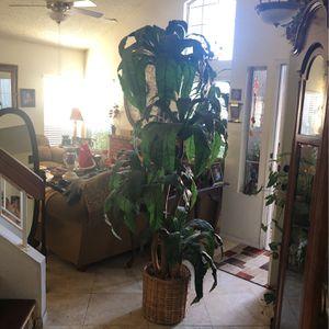 "Artificial Plant 84""T for Sale in Murrieta, CA"