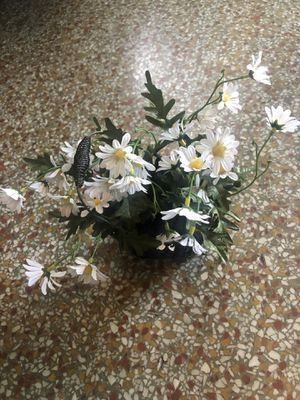 Fake daisy plant for Sale in Hollywood, FL